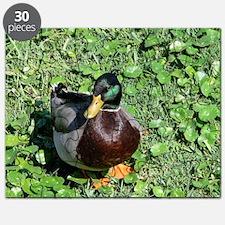 385x245_wallpeel_duck_1 Puzzle