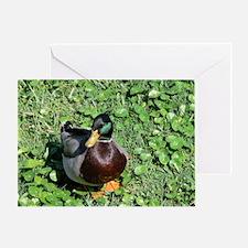385x245_wallpeel_duck_1 Greeting Card