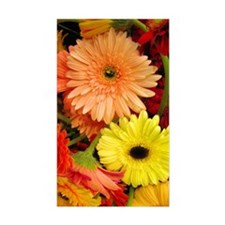 Gerbera Daisies Decal