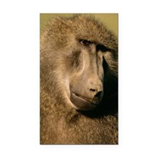 Close up of a baboon Rectangle Car Magnet