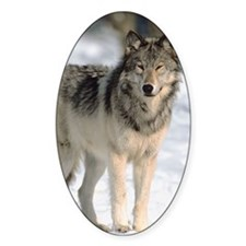 Gray wolf Decal