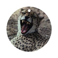 Cheetah yawning Round Ornament