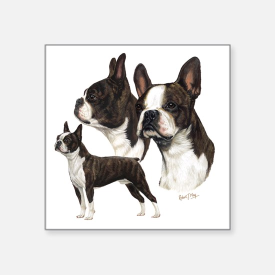 "Boston Terrier Square Sticker 3"" x 3"""