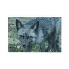Silver Fox Rectangle Magnet