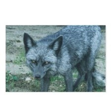 Silver Fox Postcards (Package of 8)