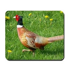 Ring-necked Pheasant Mousepad