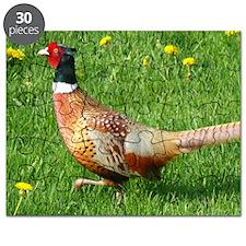 Ring-necked Pheasant Puzzle