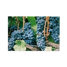 Wine Country Grapes Rectangle Magnet