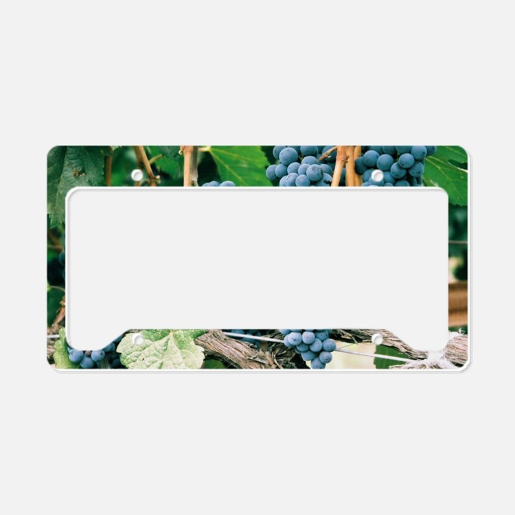 Wine Country Grapes License Plate Holder