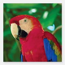 """Parrot Square Car Magnet 3"""" x 3"""""""
