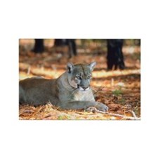 Panther Rectangle Magnet