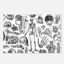 anatomy_white_pillow_case Postcards (Package of 8)