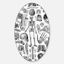 anatomy_W_twin_duvet Decal