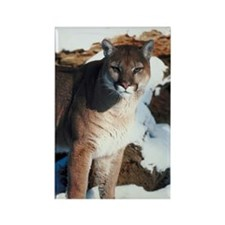 Cougar standing outdoors Rectangle Magnet