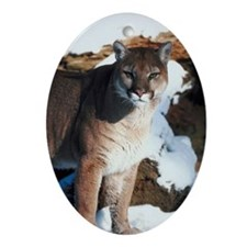 Cougar standing outdoors Oval Ornament