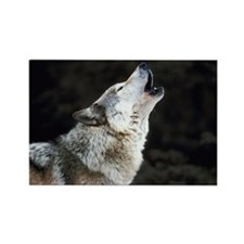 Howling timber wolf Rectangle Magnet