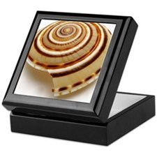 Single seashell on white background,  Keepsake Box