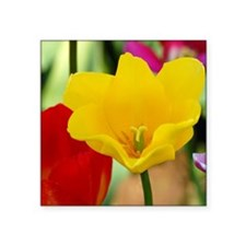 "Yellow Tulip Square Sticker 3"" x 3"""