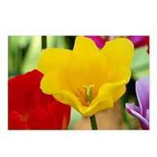 Yellow Tulip Postcards (Package of 8)