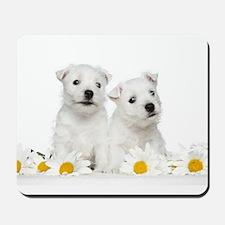 Westie Puppies Mousepad