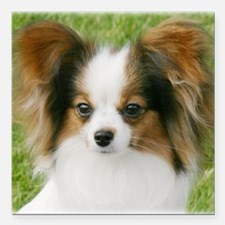 "Papillon 9Y128D-010 Square Car Magnet 3"" x 3"""