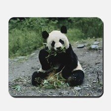 Cute Panda Mousepad