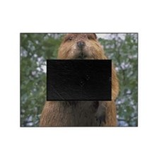 Cute Beaver Picture Frame