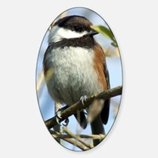 Black-Capped Chickadee Decal