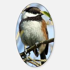 Black-Capped Chickadee Sticker (Oval)