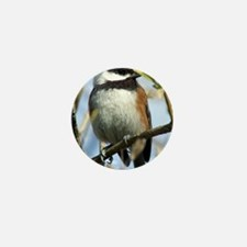 Black-Capped Chickadee Mini Button