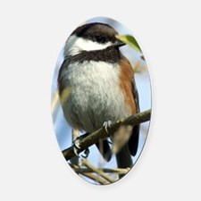 Black-Capped Chickadee Oval Car Magnet