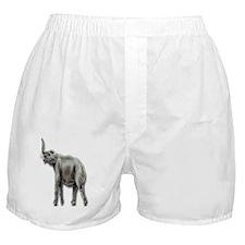 tetralophodon - elephant Boxer Shorts
