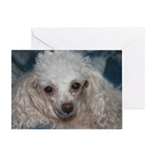 honey the tea cup poodle 2 Greeting Card
