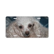 honey the tea cup poodle 2 Aluminum License Plate