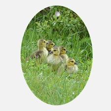5 Goslings Ornament (Oval)