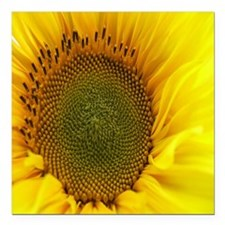 "Sunflower Square Car Magnet 3"" x 3"""