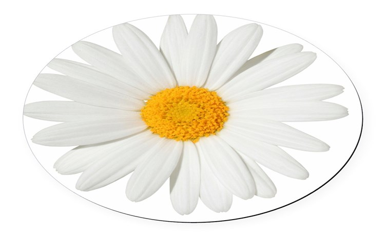 Daisy Gifts & Merchandise | Daisy Gift Ideas & Apparel - CafePress