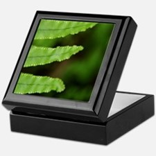 Forest Fern Keepsake Box