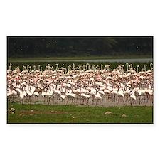 flamingos Decal