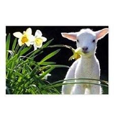 LAMB AND FLOWERS Postcards (Package of 8)