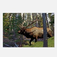 Bell Elk 3 Postcards (Package of 8)