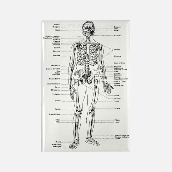 labeled skeleton Rectangle Magnet