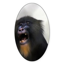 FEMALE MANDRILLS 2 Decal