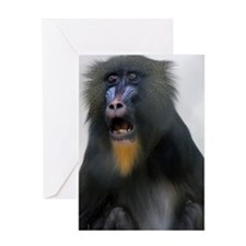 FEMALE MANDRILLS  Greeting Card