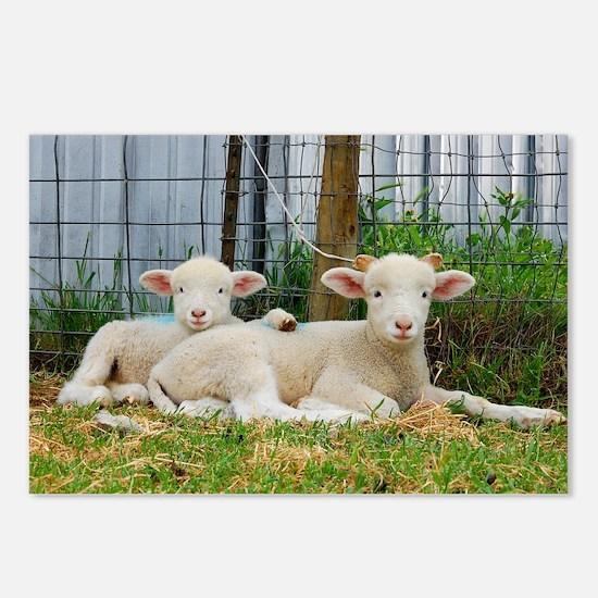 Ewephorics Buddy Lambs Postcards (Package of 8)