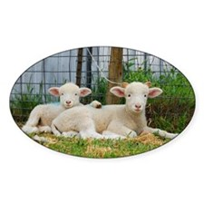 Ewephorics Buddy Lambs Decal