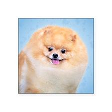 "Funny Pomeranian Square Sticker 3"" x 3"""