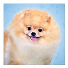 "Funny Pomeranian Square Car Magnet 3"" x 3"""