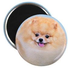 Funny Pomeranian Magnet