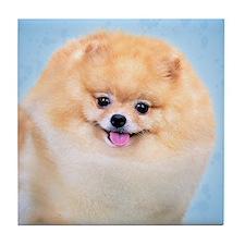 Funny Pomeranian Tile Coaster